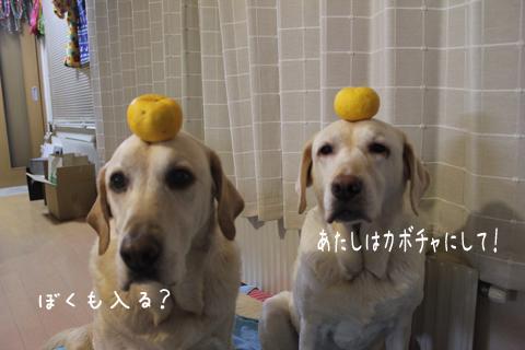 yuzu2_20111222181118.jpg