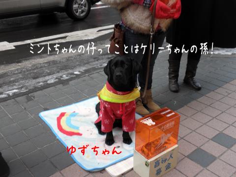 yuzu_20111210230417.jpg