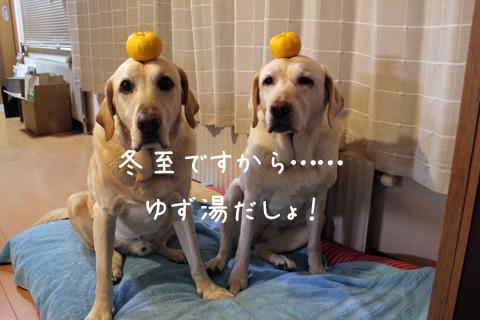 yuzu_20111222181118.jpg