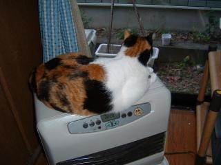 ファンヒーター猫