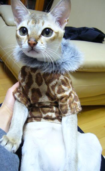 豹柄なのだワイルドなのだ