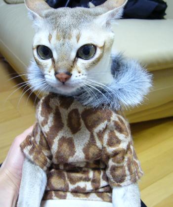 豹柄なのだ