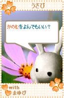 061028usabiyokoku4.jpg
