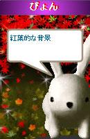 061108pyonchan7.jpg