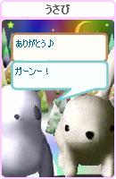 070128pankichichan16.jpg