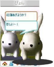 070403usanapyonchan3.jpg
