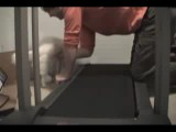 Lazy cat on a Treadmill