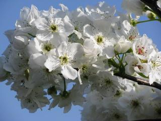 2011-5-14-12_20110514162344.jpg