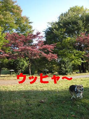 20071105233753.jpg