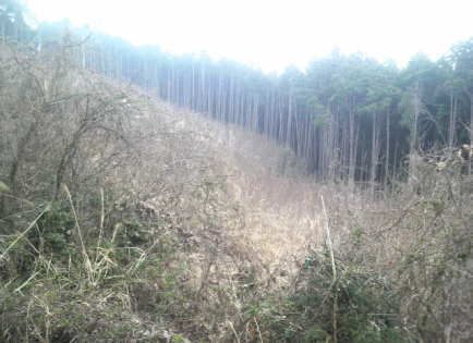 2011.4.11 11.jpg