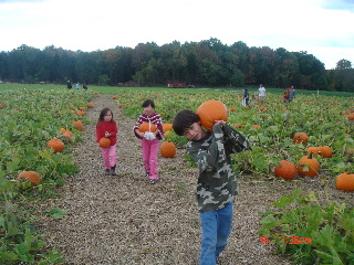 1-pumpkin.jpg
