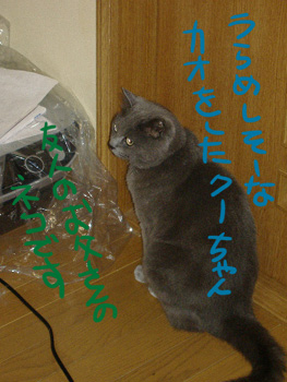 cat.3.jpg