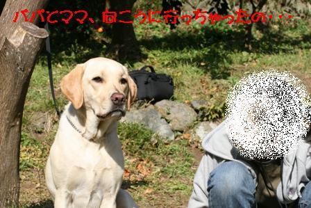 12_20071211120446.jpg