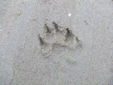 海の公園 ノエルの足跡