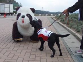パンダさんにご挨拶