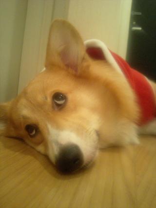 クリスマスだからね~♪