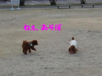 2007_0211mirutaru0312.jpg