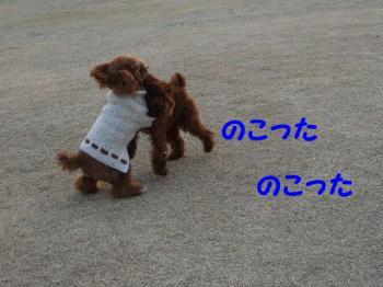2007_0211mirutaru0328.jpg