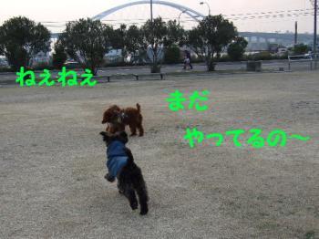 2007_0211mirutaru0337.jpg