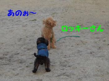 2007_0211mirutaru0345.jpg