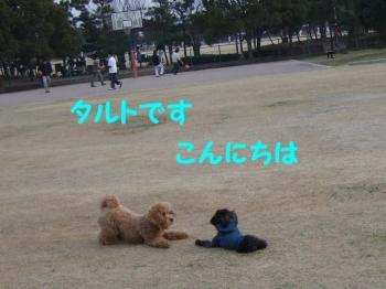 2007_0211mirutaru0355.jpg