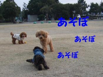 2007_0211mirutaru0356.jpg