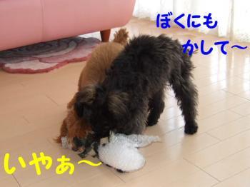 2007_0211mirutaru0373.jpg