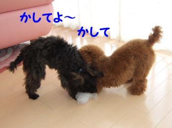 2007_0211mirutaru0374.jpg
