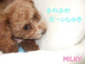 2007_0227mirutaru0143.jpg