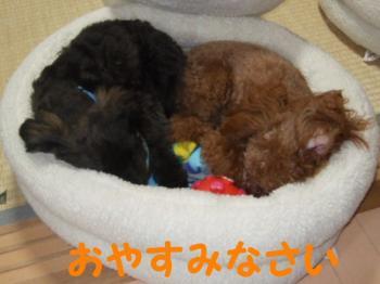 2007_0227mirutaru0146.jpg