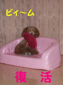 2007_0303mirutaru0166.jpg
