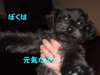 2007_0303mirutaru0173.jpg