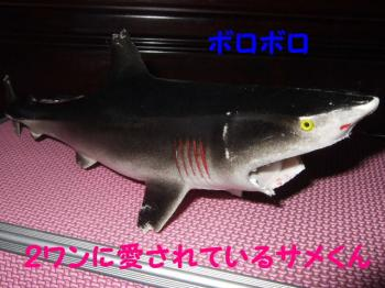 2007_0416mirutaru0500.jpg