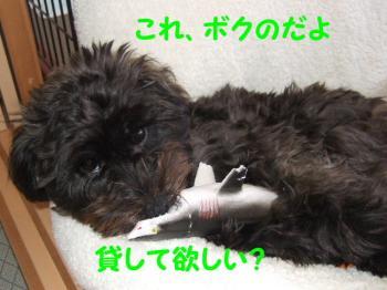 2007_0416mirutaru0512.jpg