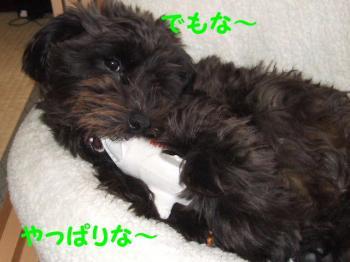 2007_0416mirutaru0514.jpg