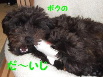 2007_0416mirutaru0515.jpg