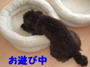 2007_0614mirutaru0447.jpg