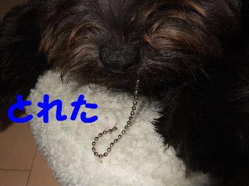 2007_0614mirutaru0450.jpg