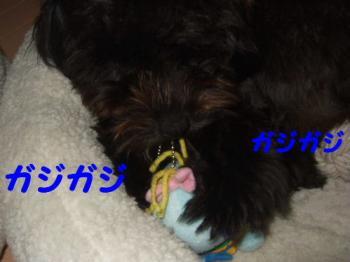 2007_0614mirutaru0452.jpg