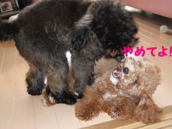 2007_0614mirutaru0462.jpg