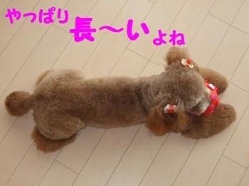 2007_0618mirutaru0518.jpg