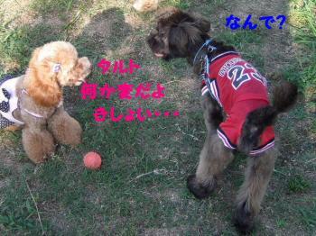 2007_0627mirutaru0593.jpg