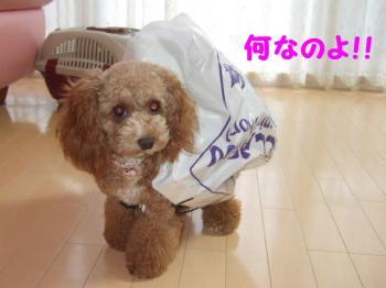 2007_0708mirutaru0611.jpg