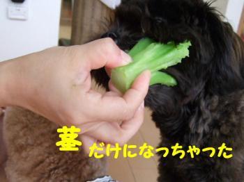 2007_0808mirutaru0205.jpg