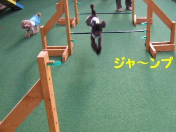 2007_0823mirutaru0280.jpg