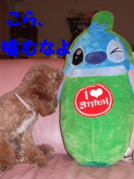2007_0823mirutaru0303.jpg
