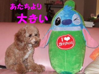2007_0823mirutaru0305.jpg