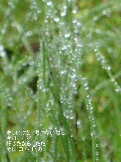 sukidakara.jpg
