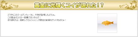 黄金鯉0508