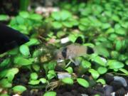 黒ひげ藻とパンダ